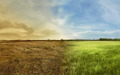 From Brown to Green: Climate Change in Central & Eastern Europe